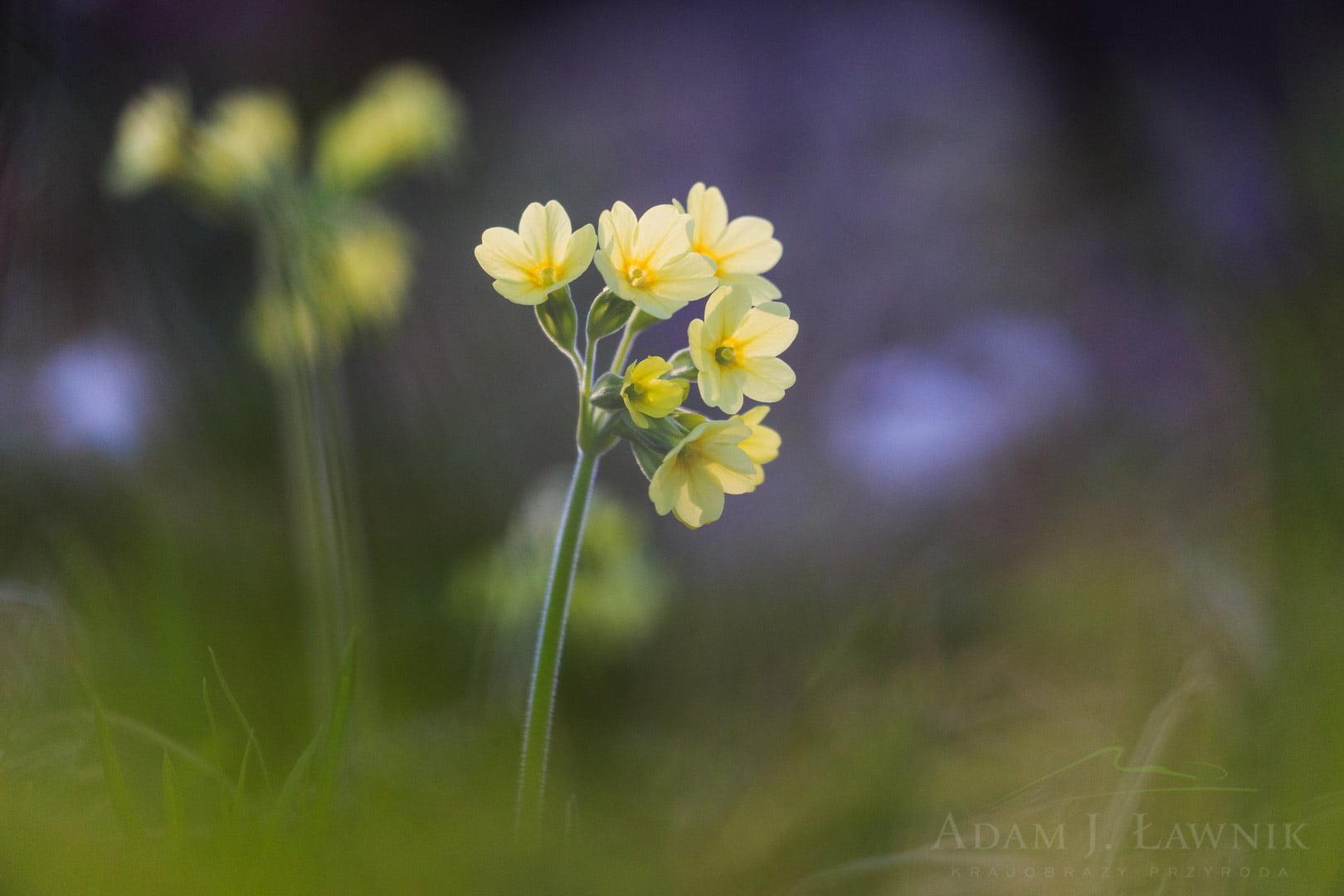 Spring flowers 1504-00482C