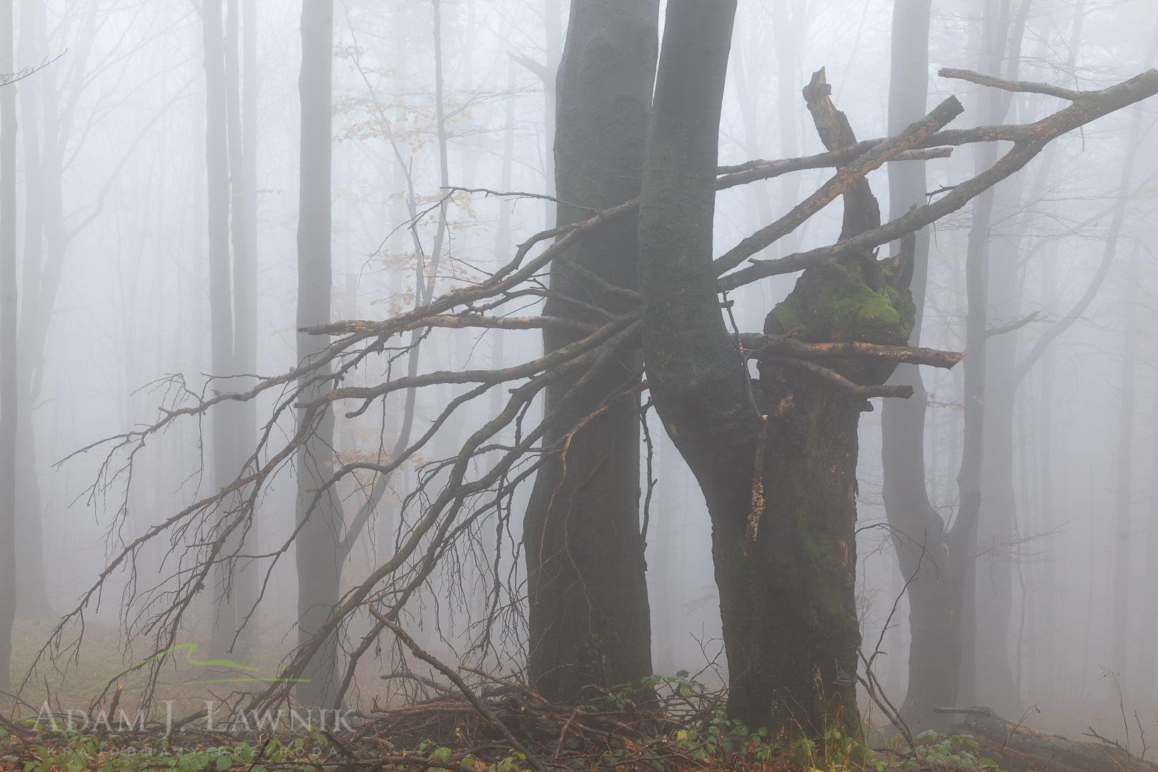 Bieszczady Mountains, Poland 0710-02104C