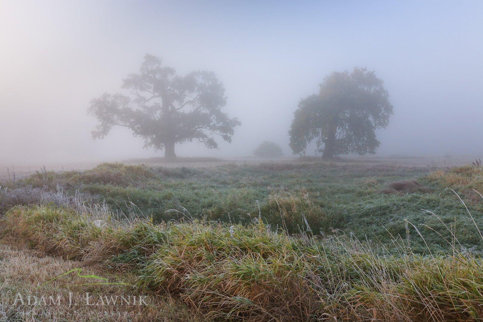 Rogalin Landscape Park, Poland 1110-02111C