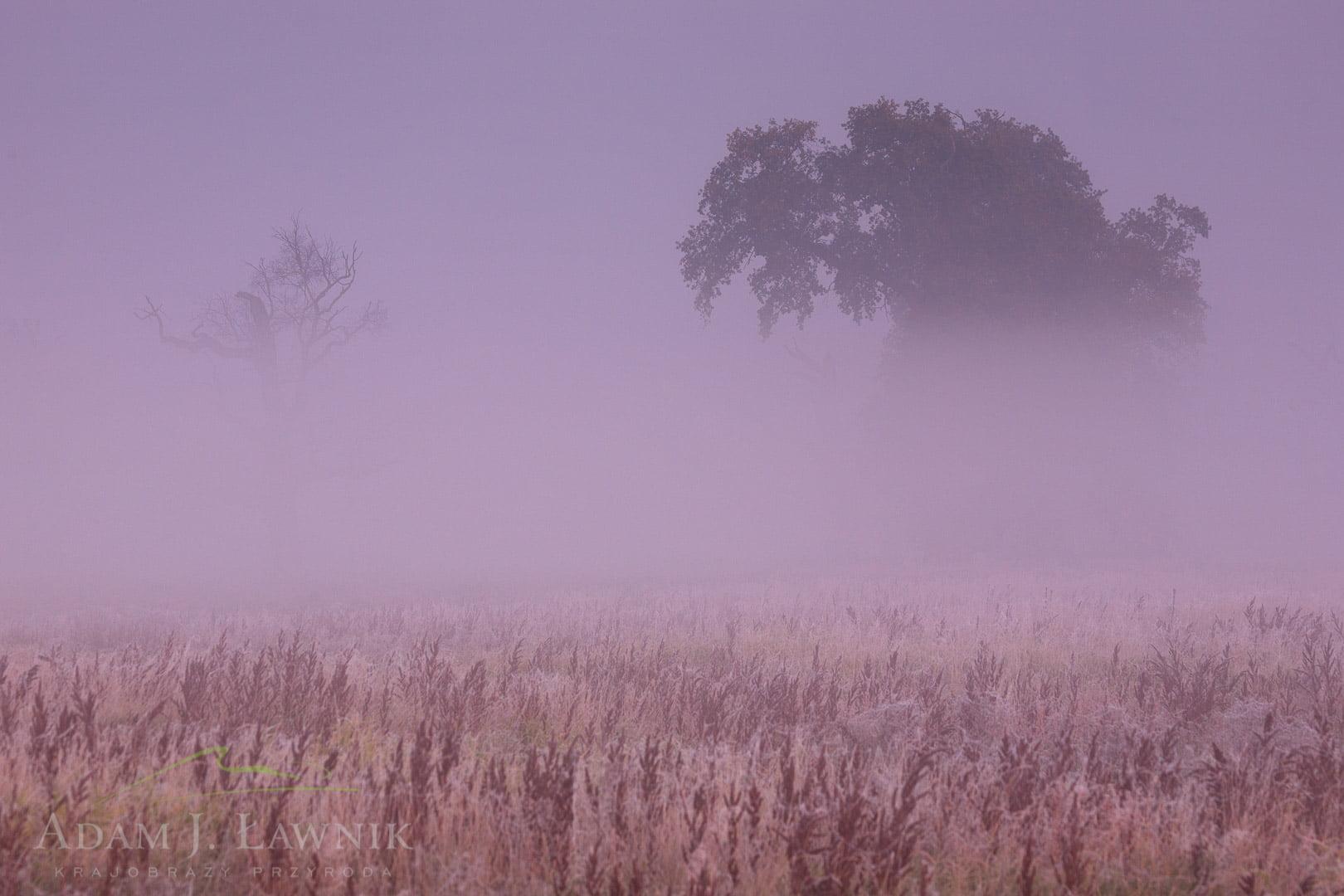 Rogalin Landscape Park, Poland 1110-02122C