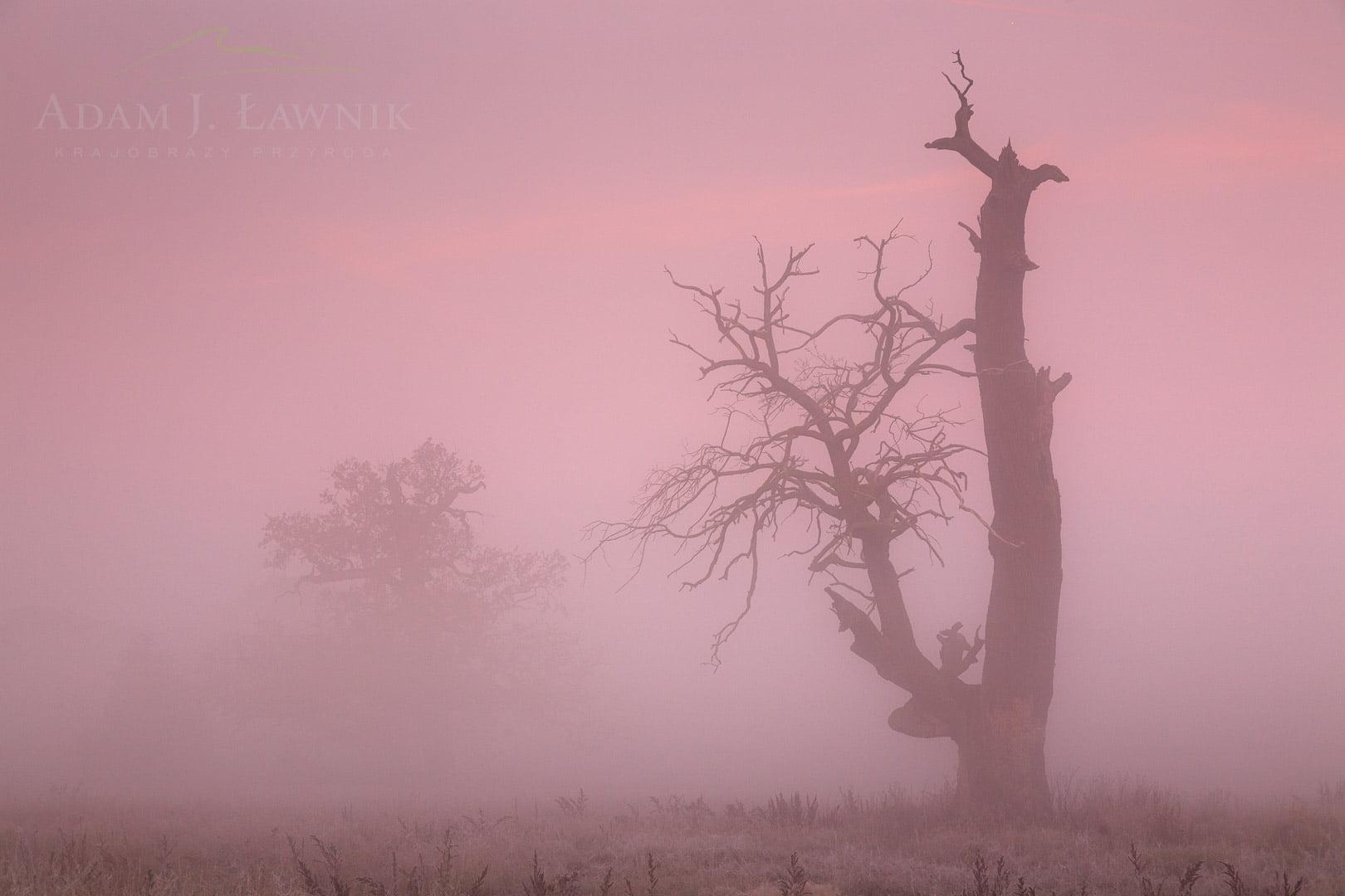 Rogalin Landscape Park, Poland 1110-02123C
