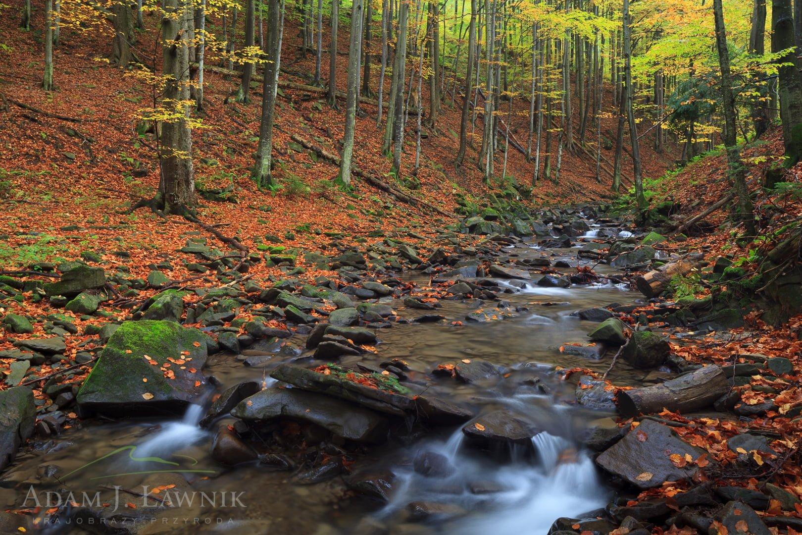 Babia Góra National Park, Poland 1210-02821C
