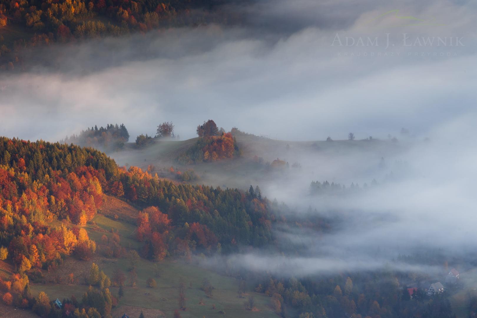 Babia Góra National Park, Poland 1310-01277C
