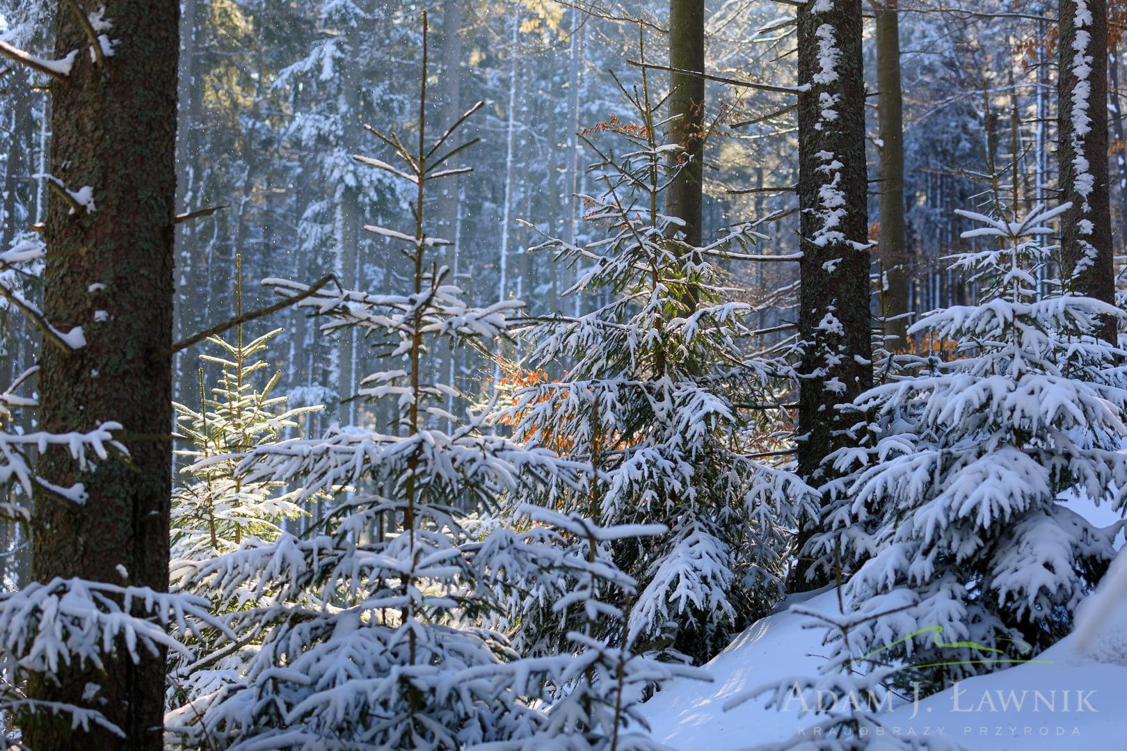 Babia Góra National Park, Poland 1702-00208C