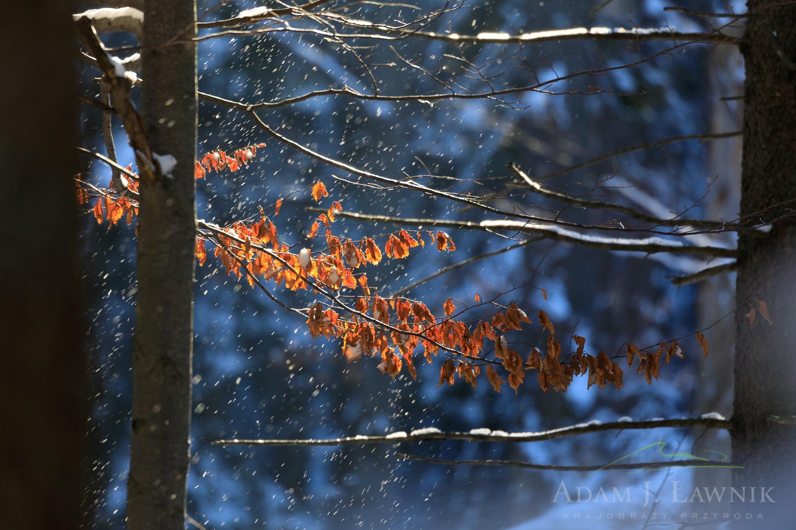 Śnieg spadający z drzew