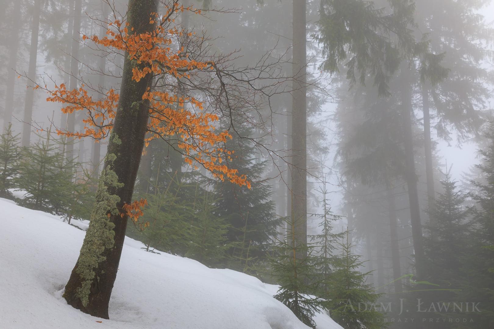 Babia Góra National Park, Poland 1702-00215C
