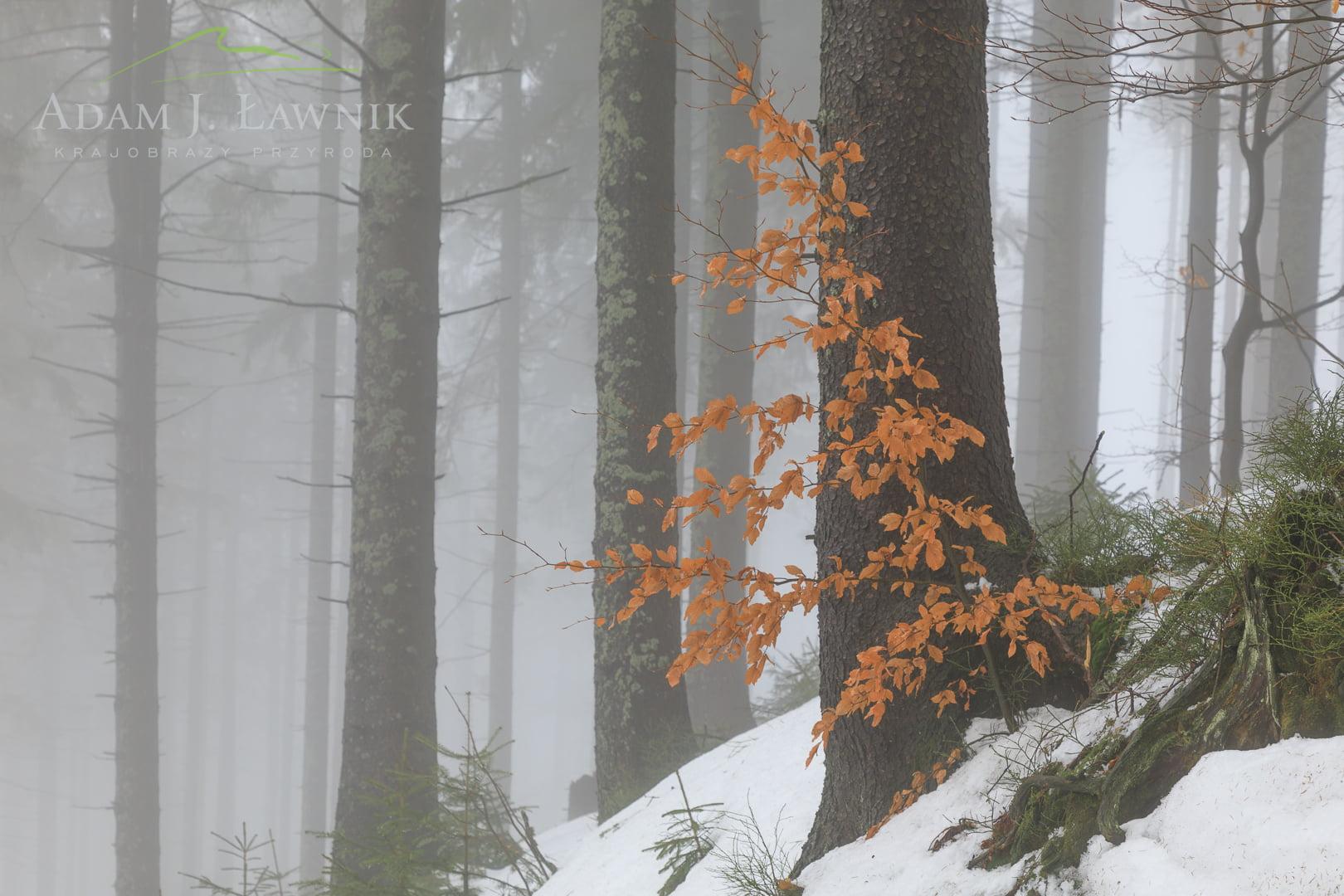 Babia Góra National Park, Poland 1702-00216C
