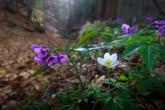 Wiosna w Babiogórskim Parku Narodowym