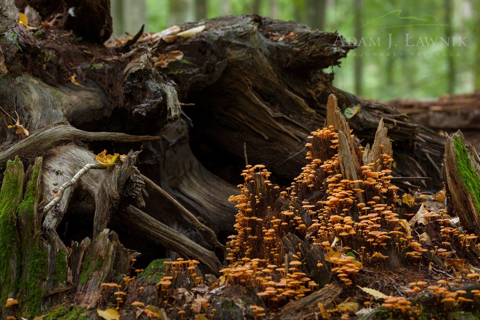Białowieża National Park, Poland 0608-02584C