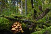 Jesień w Białowieskim Parku Narodowym