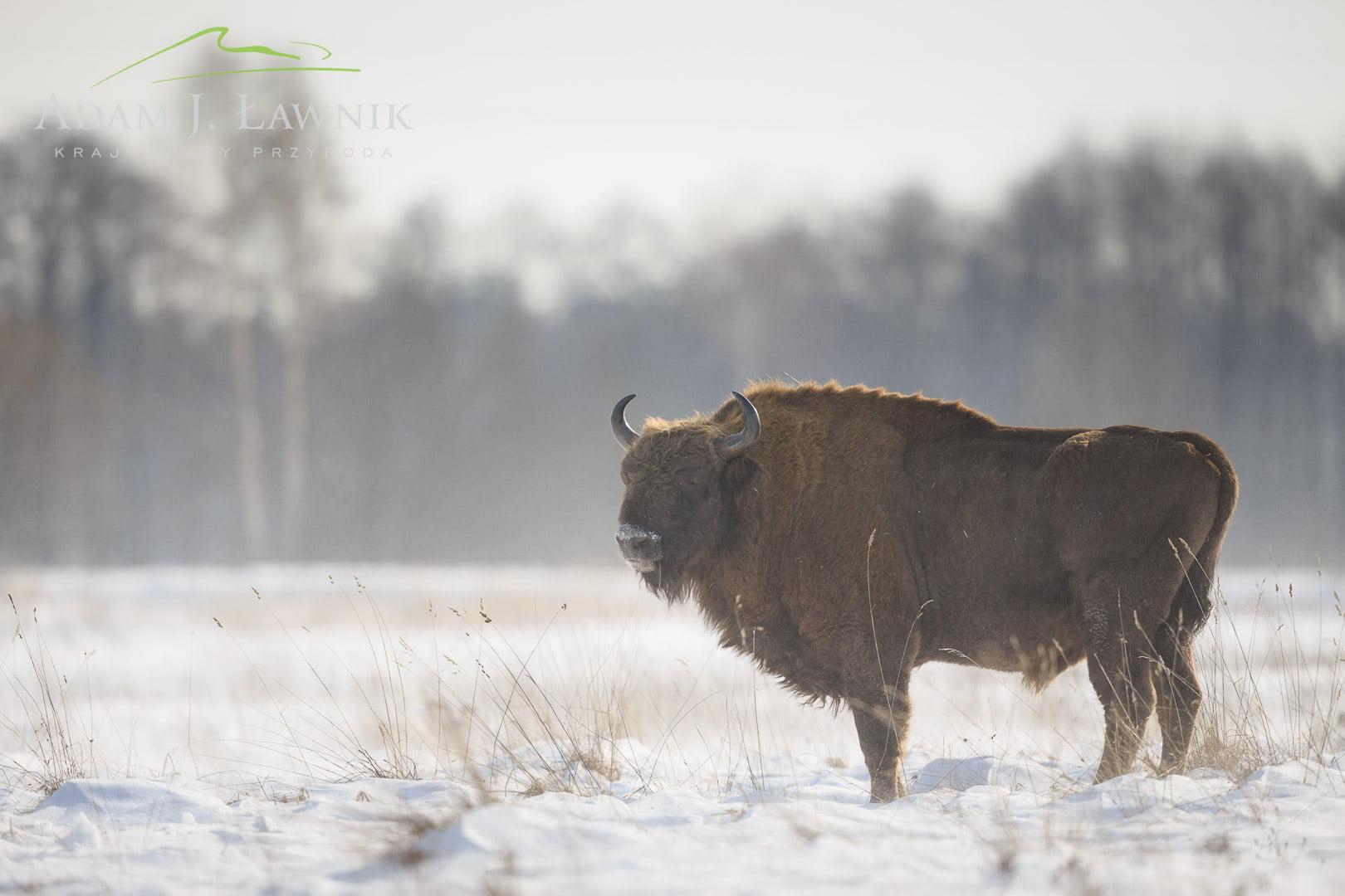 Białowieża National Park, Poland 1402-00027C