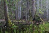 Wiosna w Białowieskim Parku Narodowym