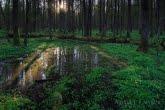 Wschód słońca w Białowieskim Parku Narodowym