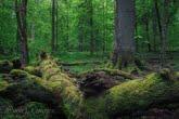 W Białowieskim Parku Narodowym