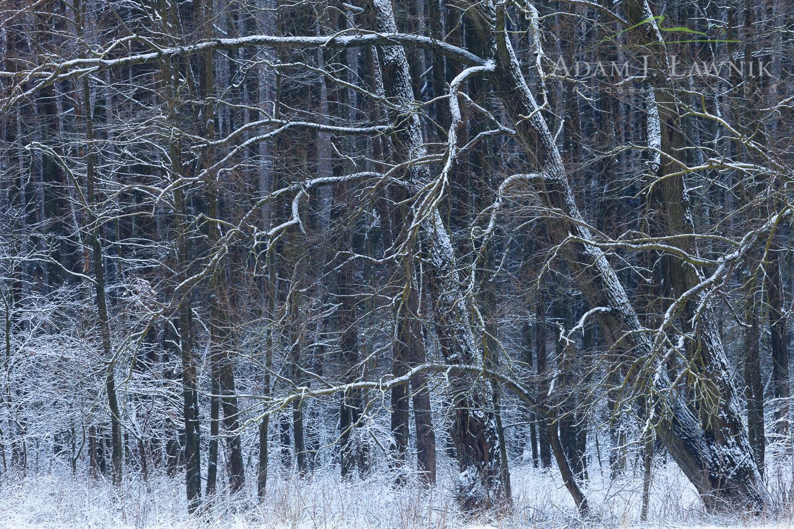 Zima w Biebrzańskim Parku Narodowym