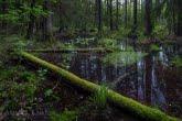 Rezerwat Czerwone Bagno w Biebrzańskim Parku Narodowym