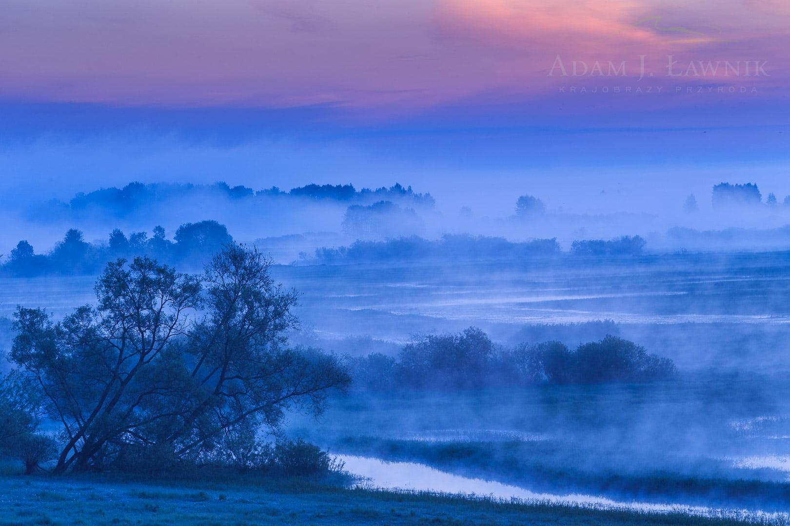 Poranne mgły w Biebrzańskim Parku Narodowym