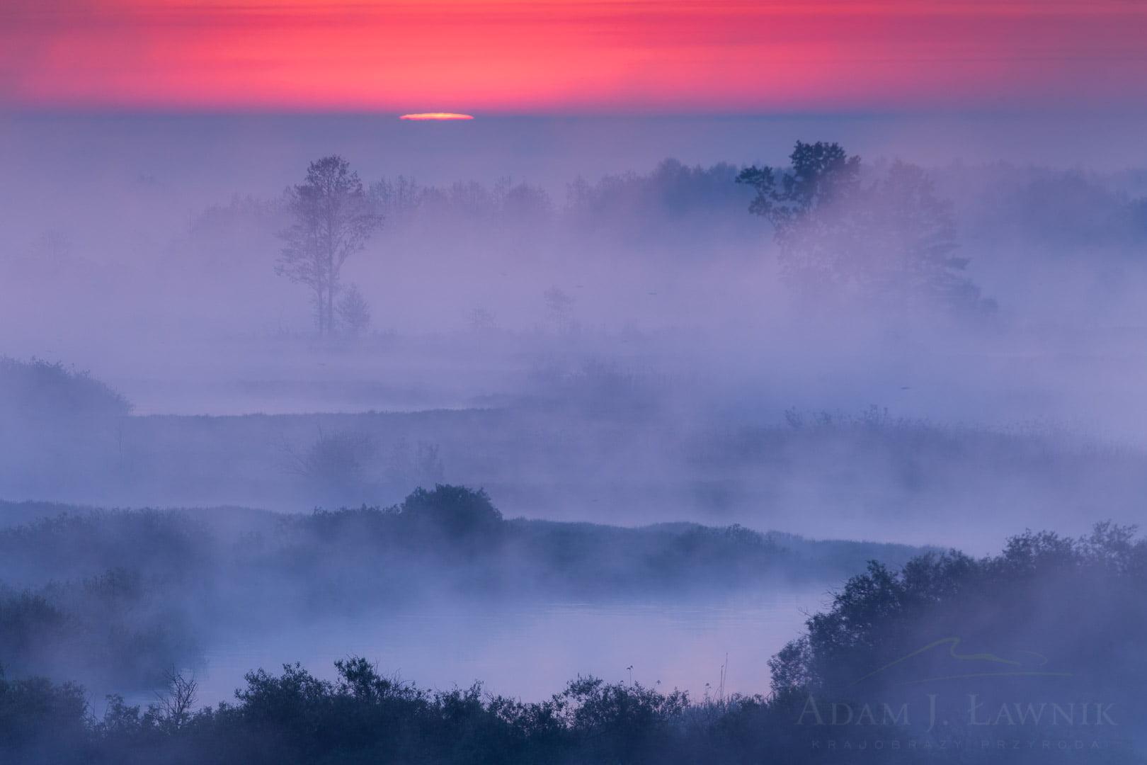 Poranne mgły w Burzynie w Biebrzańskim Parku Narodowym