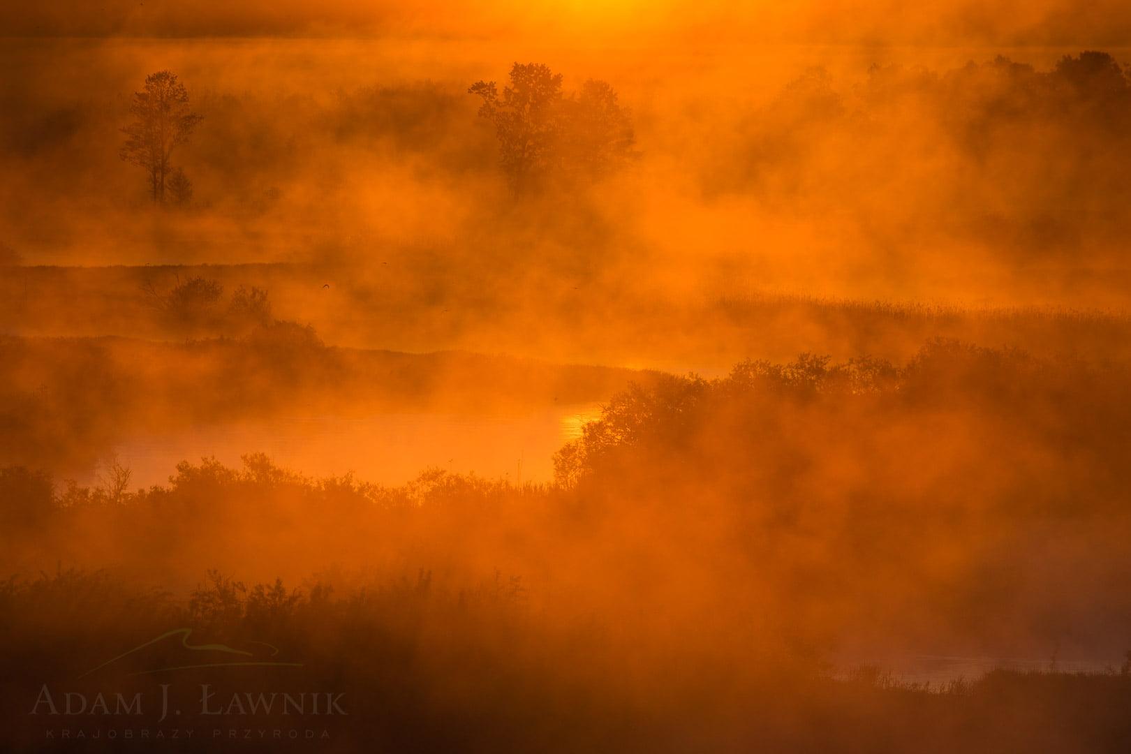 Poranne mgły nad Biebrzą