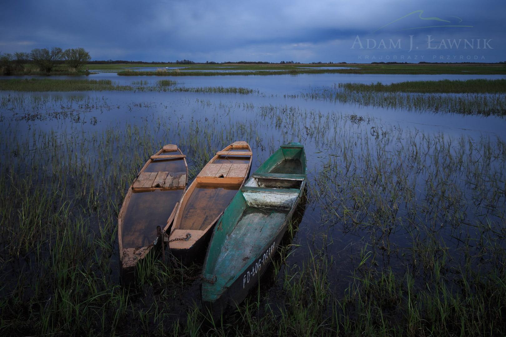 Łódki pychówki na wiosennych rozlewiskach Biebrzy