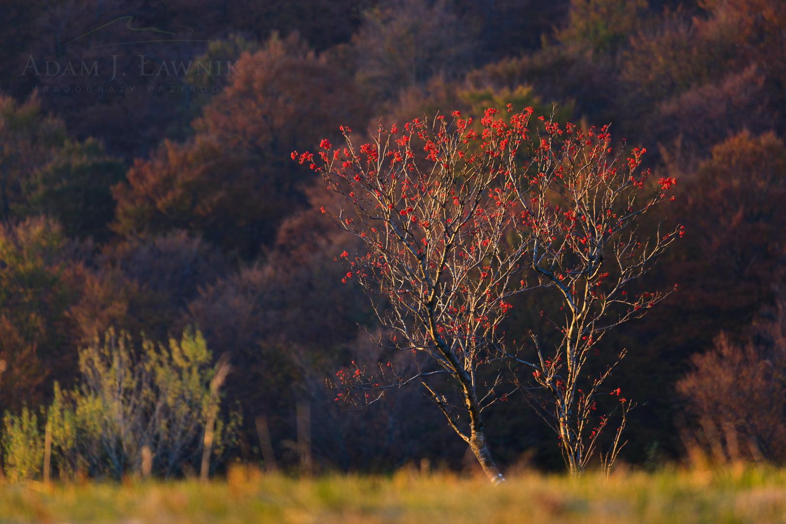 Złota jesień w Bieszczadach