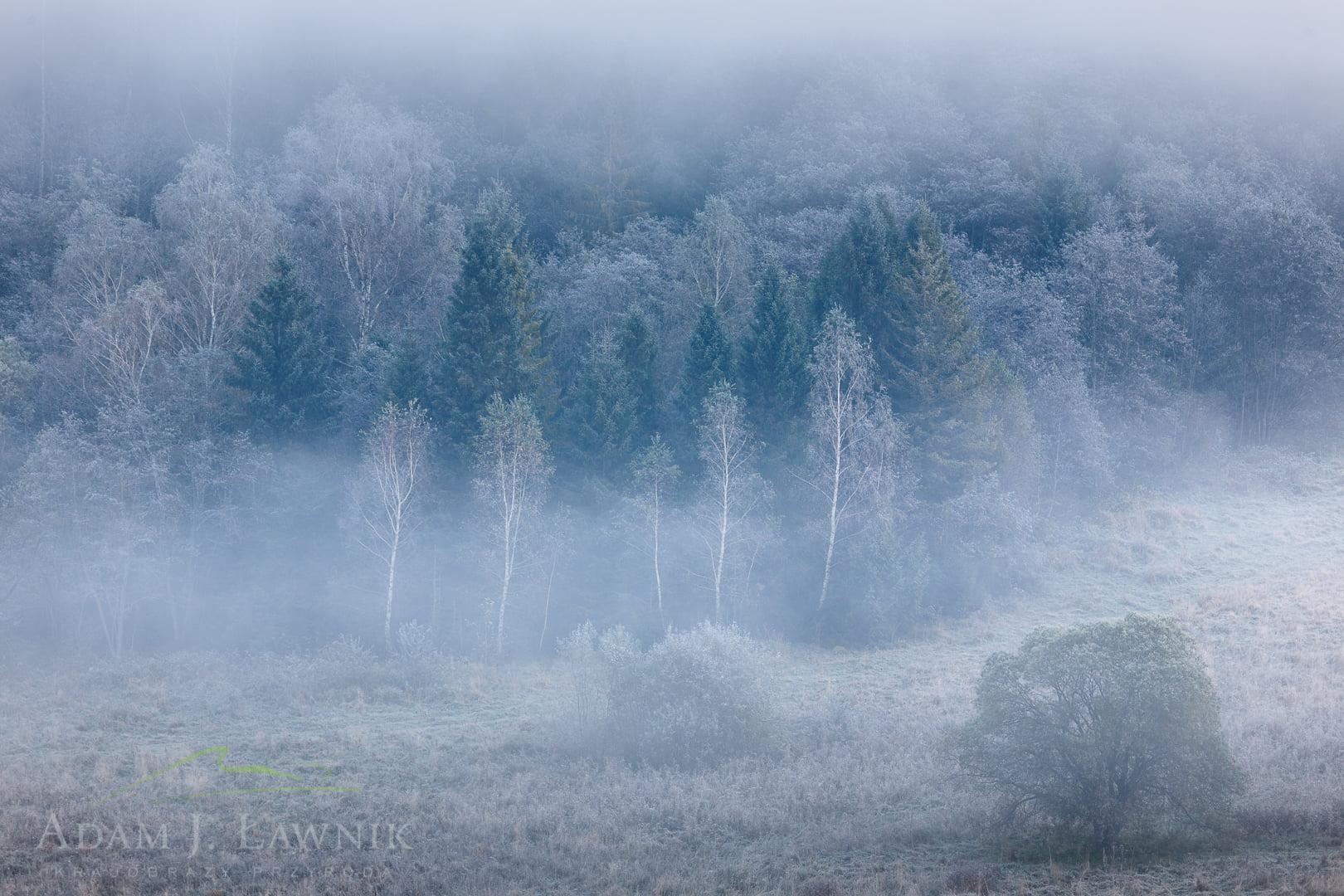 Bieszczady National Park, Poland 1010-01439C
