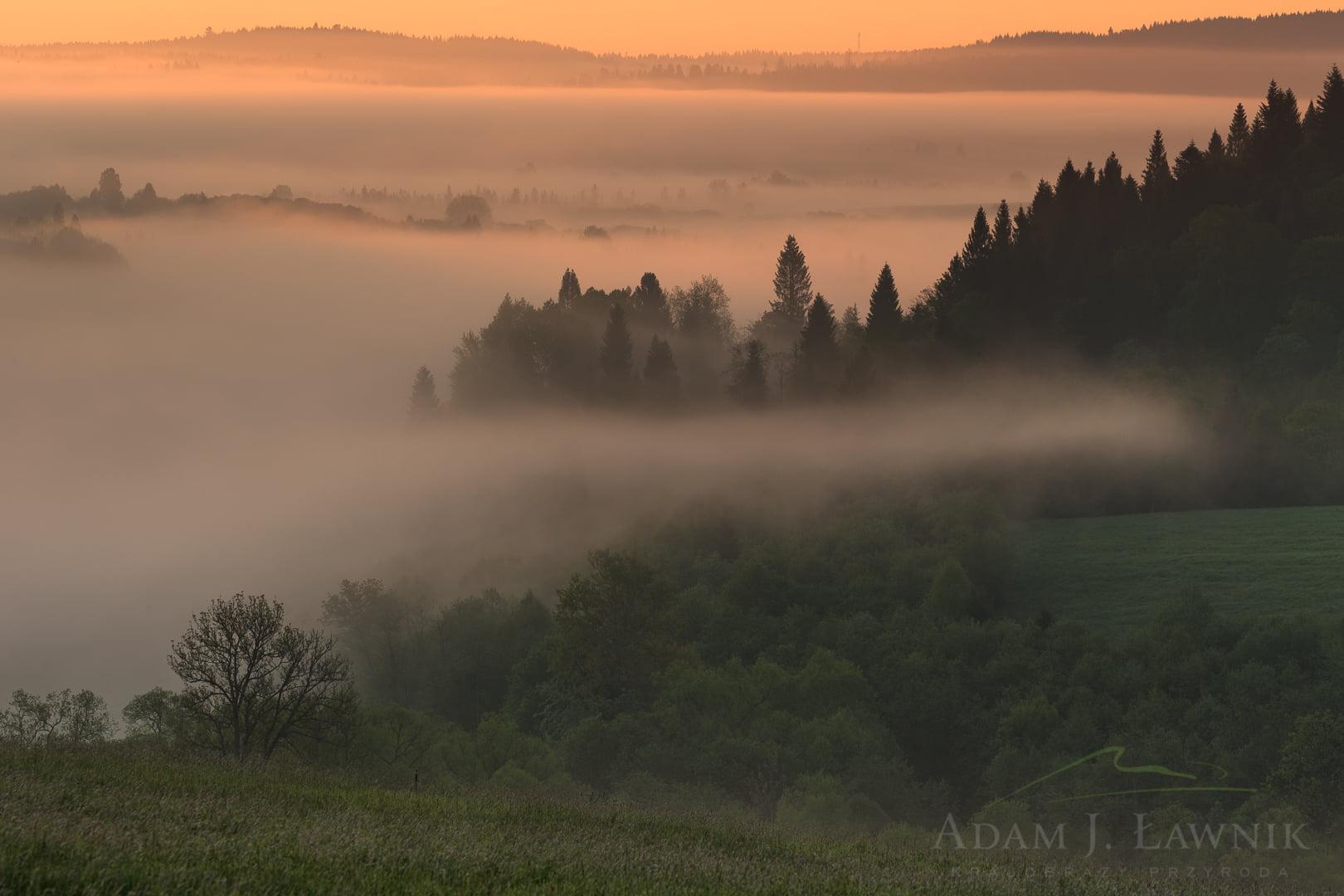 Poranne mgły w dolinie