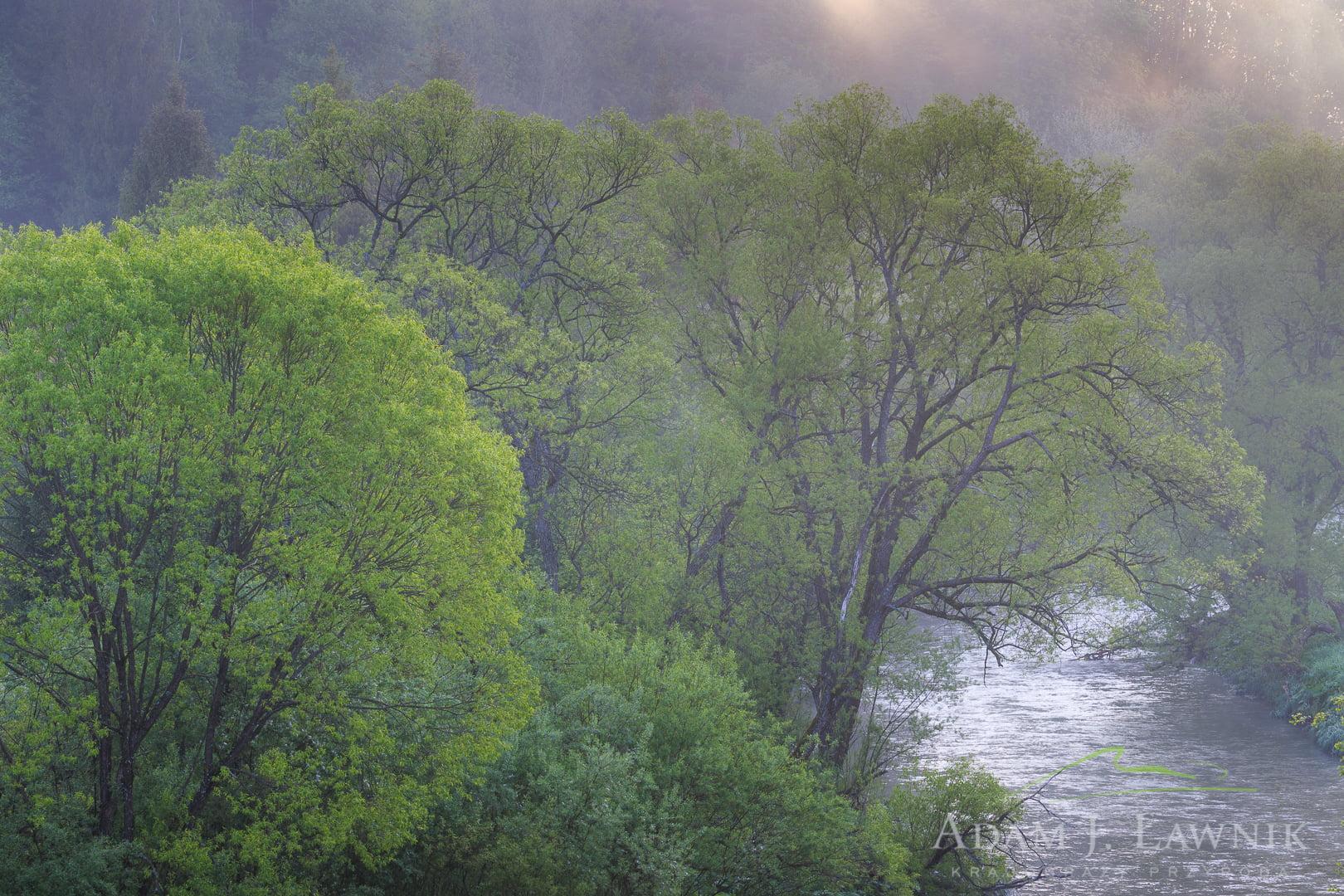 Bieszczady National Park, Poland 1505-01256C