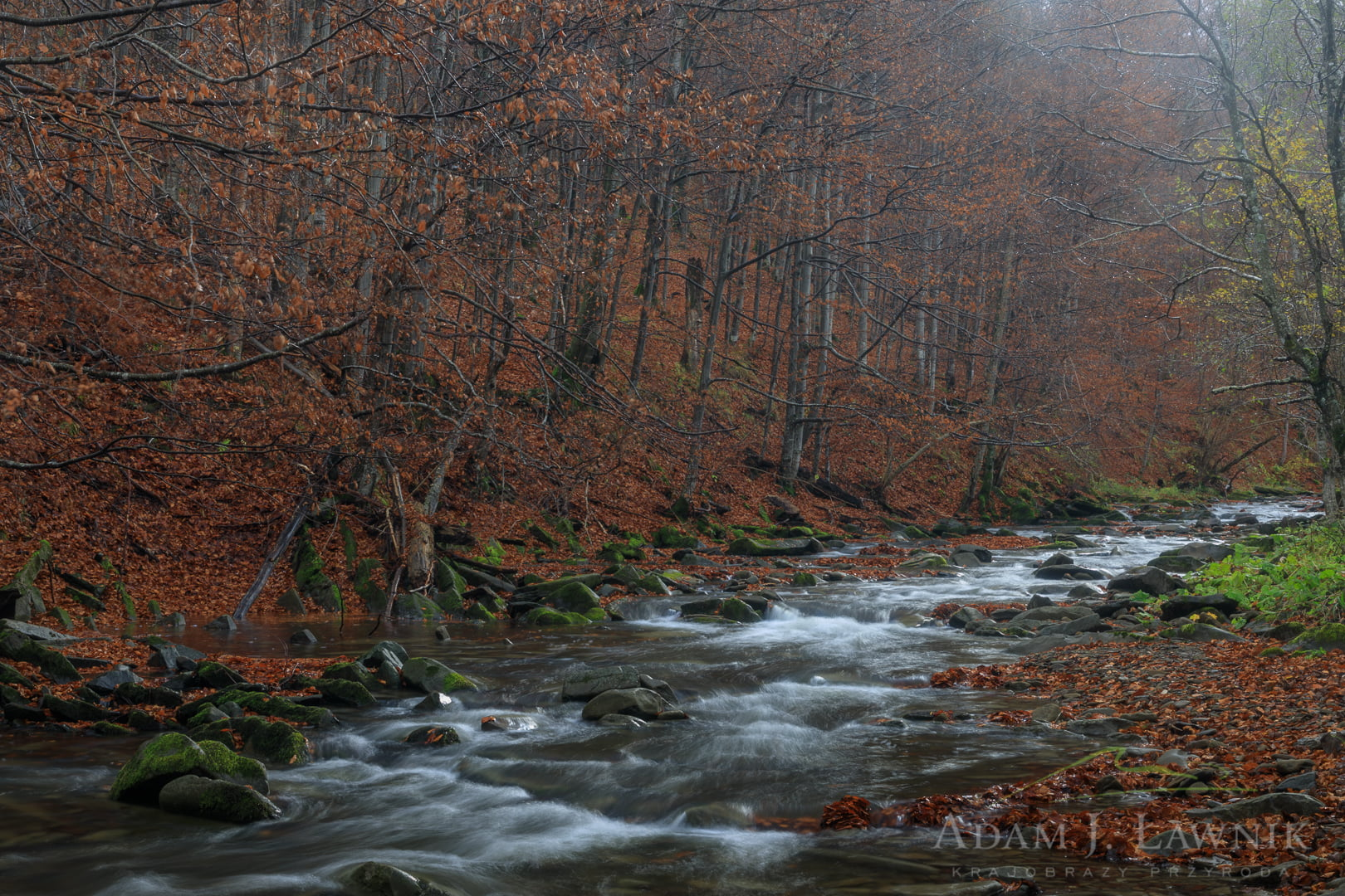 Potok Dwernik w Bieszczadzkim Parku Narodowym