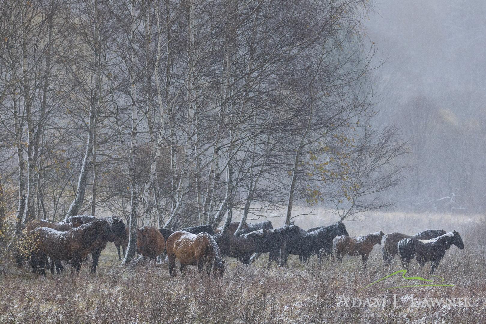 Bieszczady National Park, Poland 1810-00595C