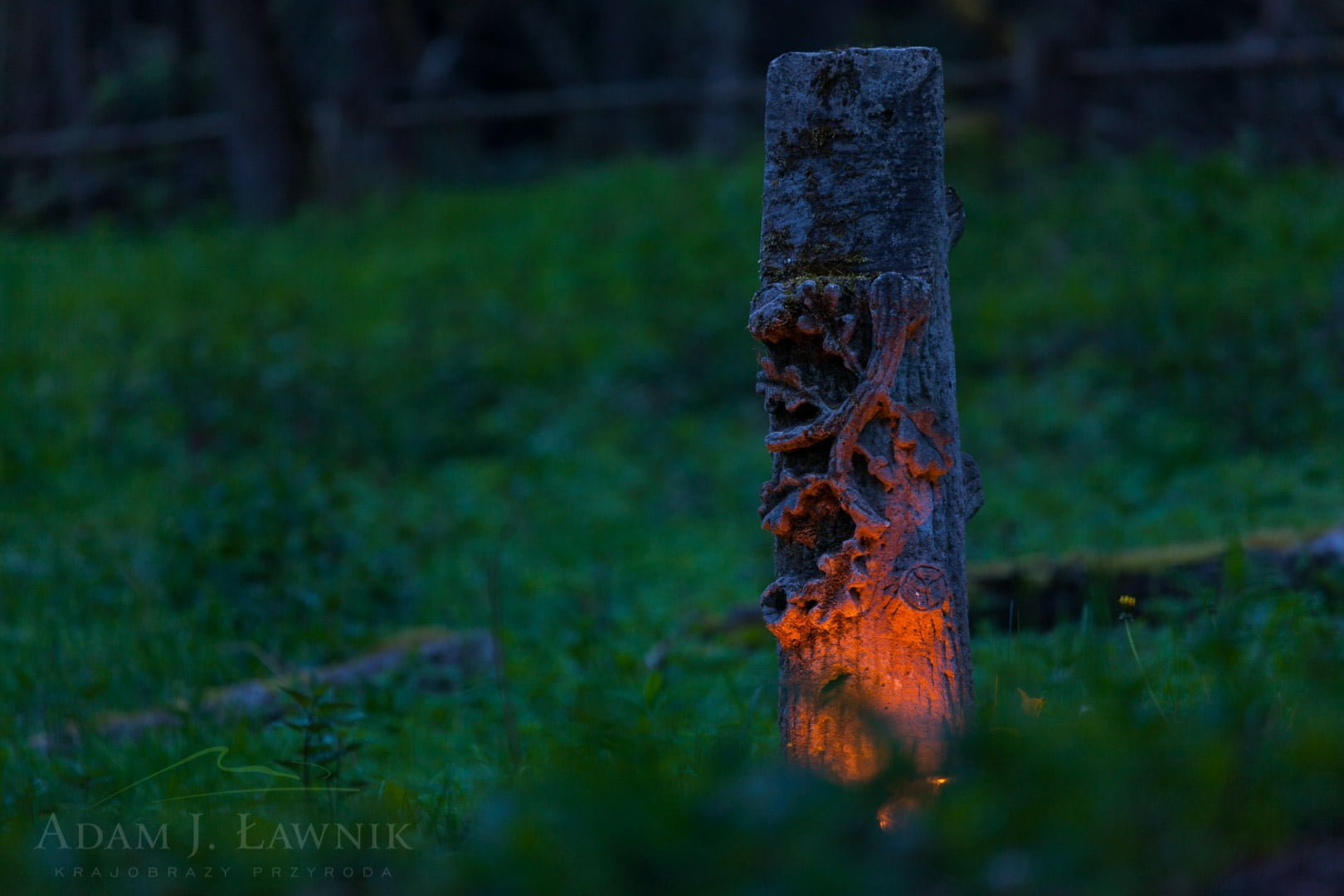 Drawa National Park, Poland 1005-00695C
