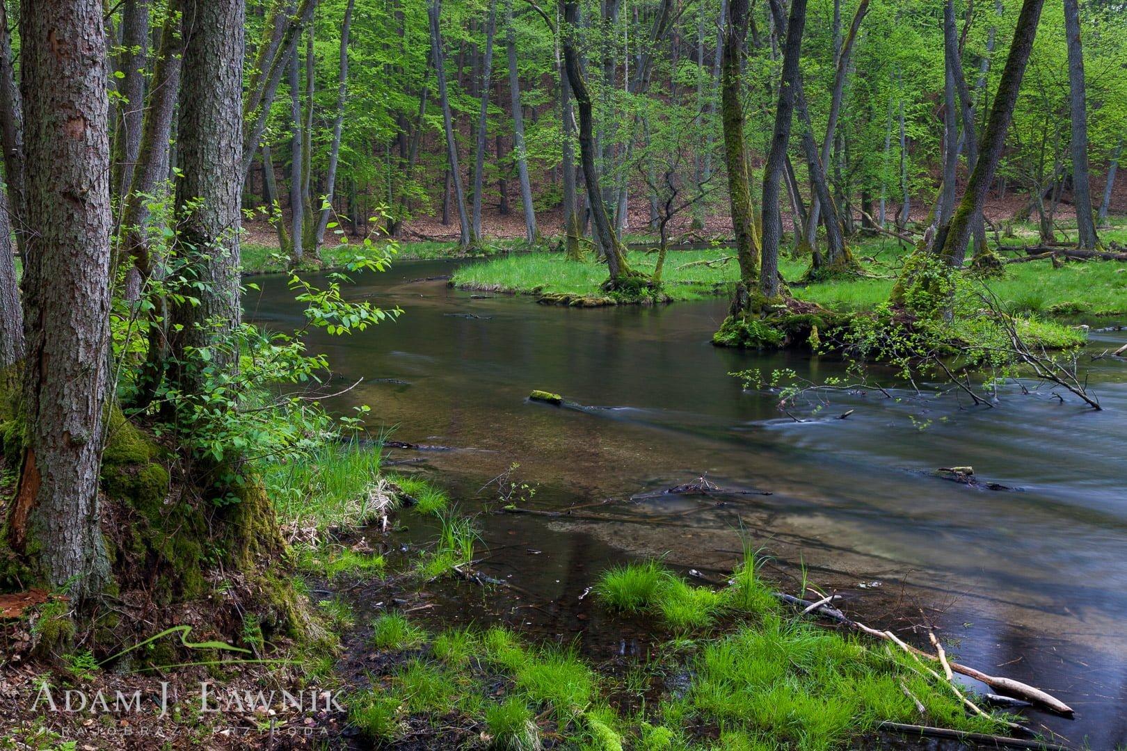Drawa National Park, Poland 1005-00708C