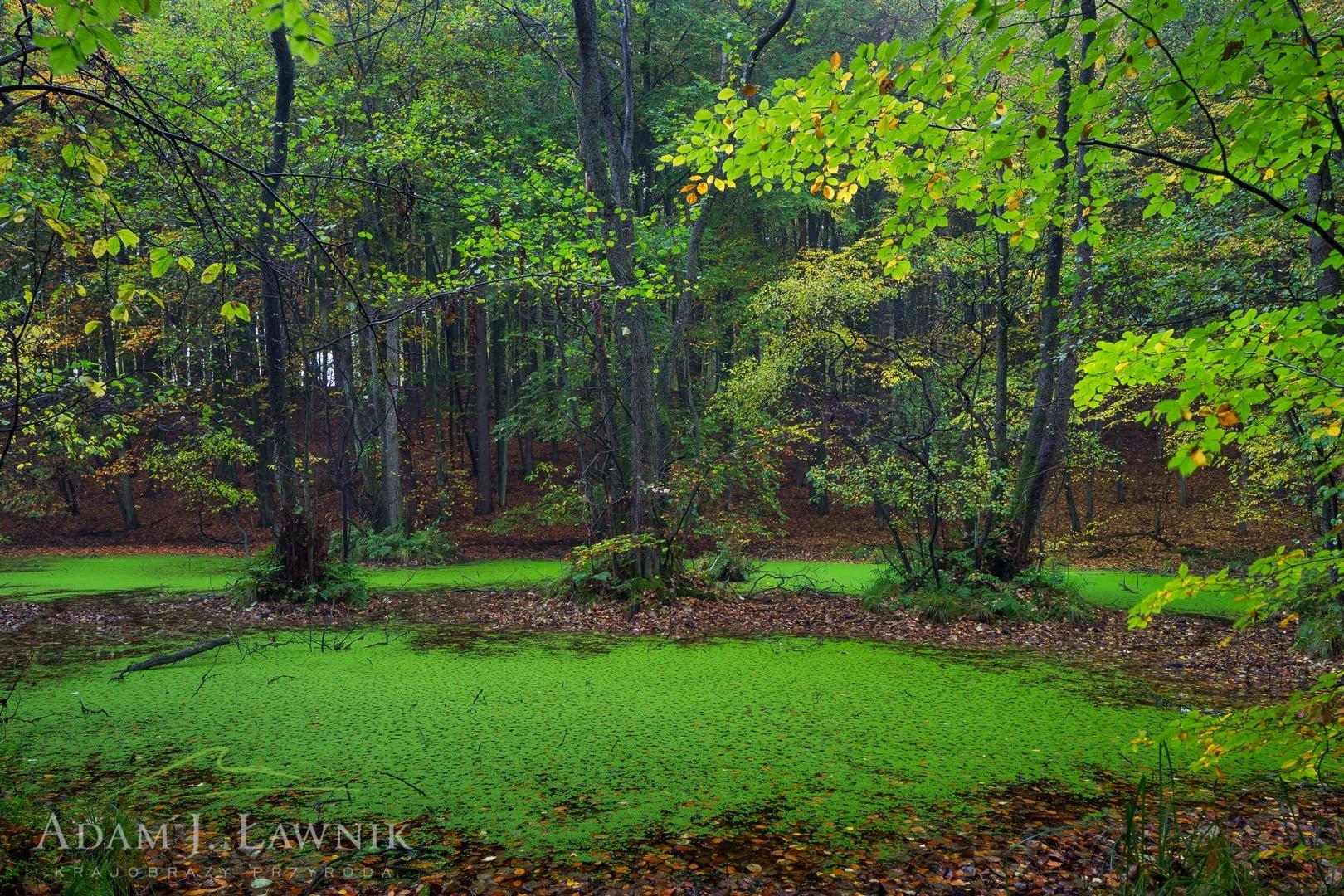 Drawa National Park, Poland 1410-01079C
