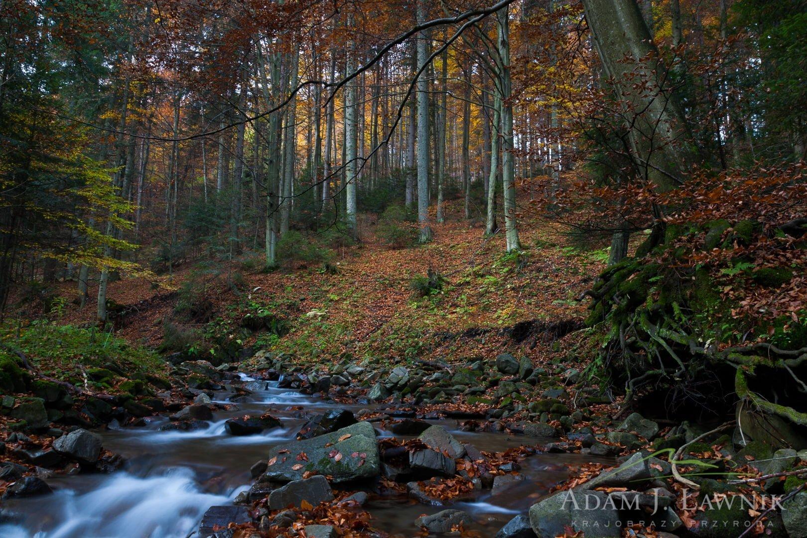 Gorce National Park, Poland 0810-00920C
