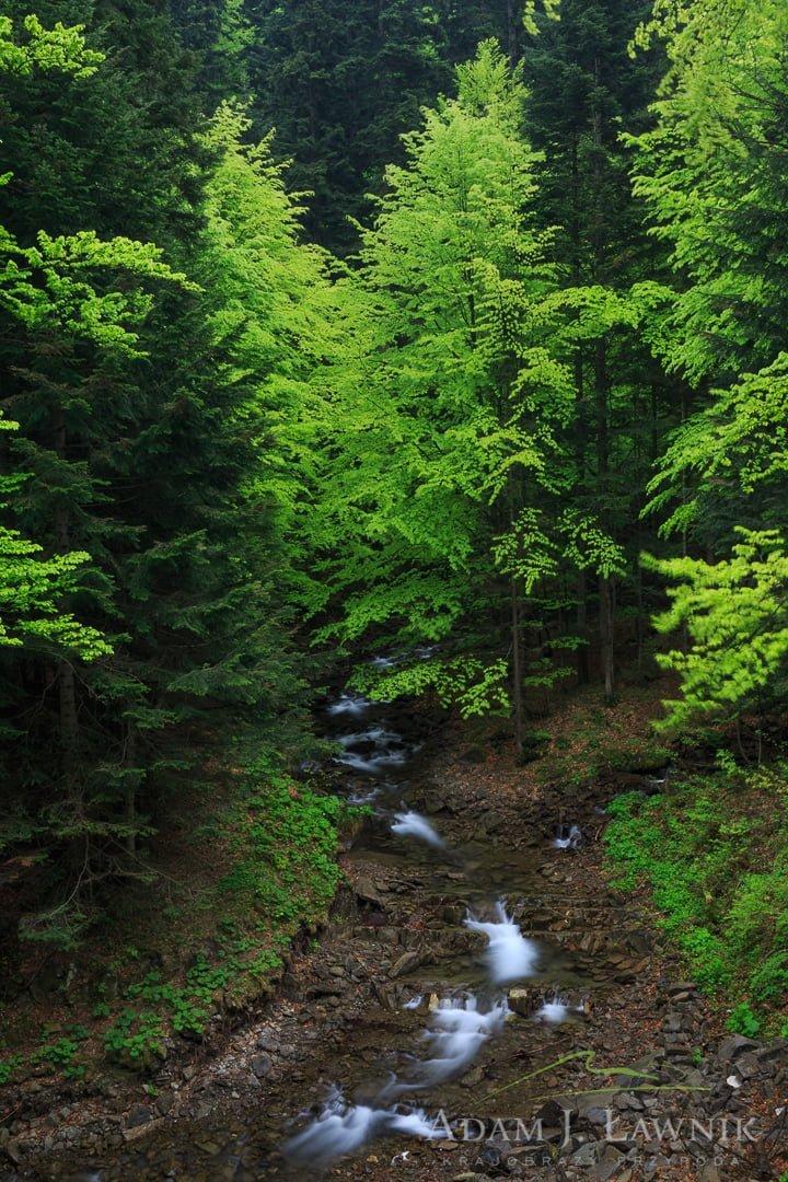 Gorce National Park, Poland 1505-00841C