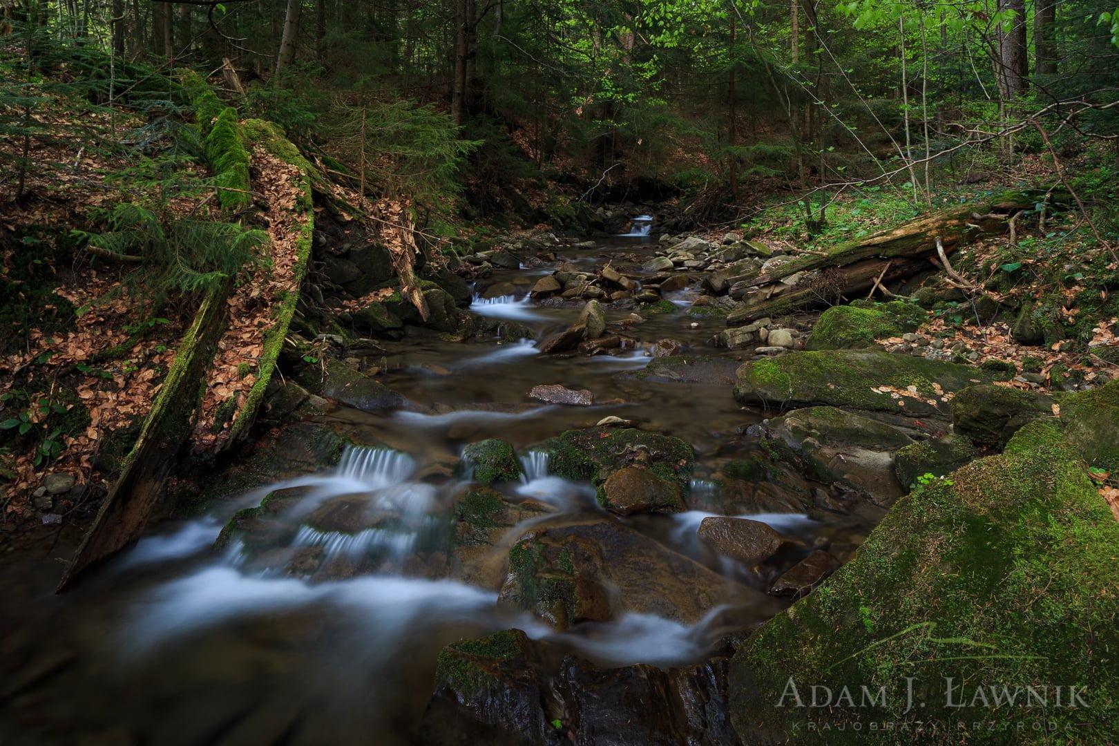 Gorce National Park, Poland 1505-00850C