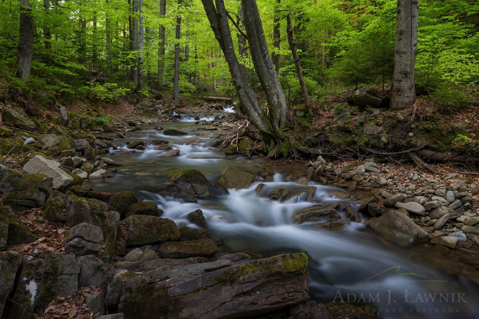 Gorce National Park, Poland 1505-00854C