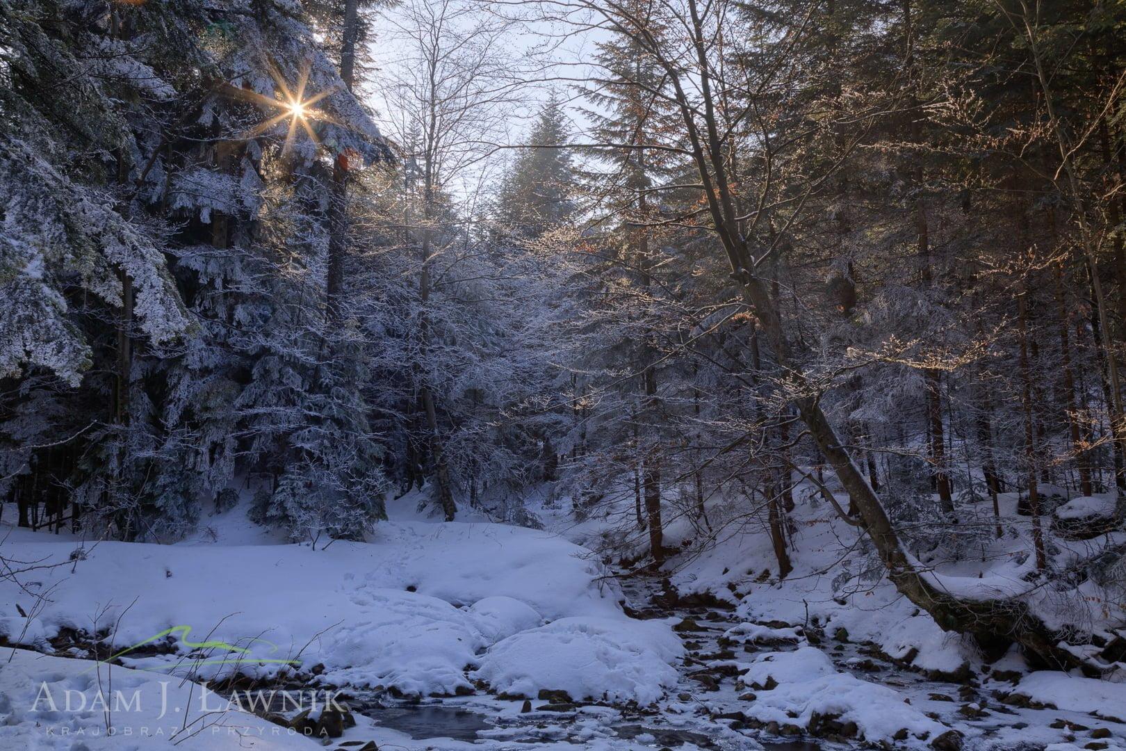 Gorce National Park, Poland 1702-00160C