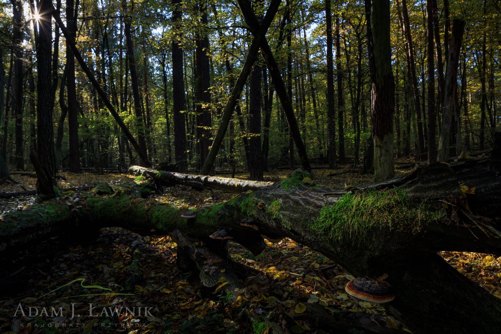 Kampinos National Park, Poland 1710-01109C