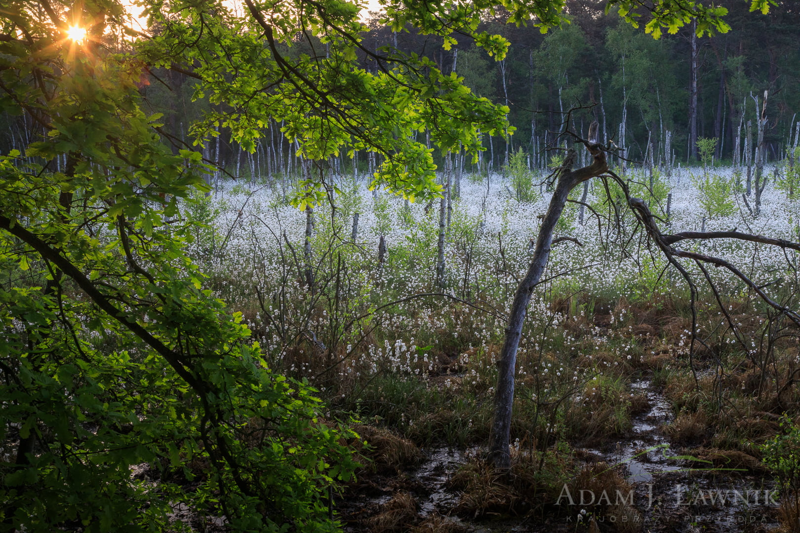 Kampinos National Park, Poland 1805-00087C