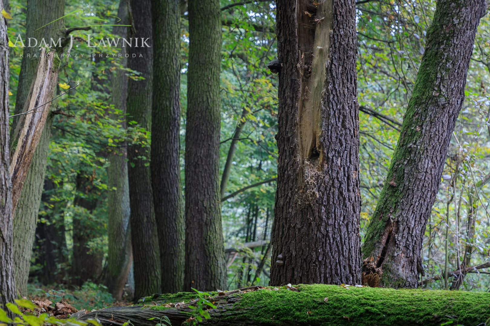 Kampinos National Park, Poland 1810-00456C