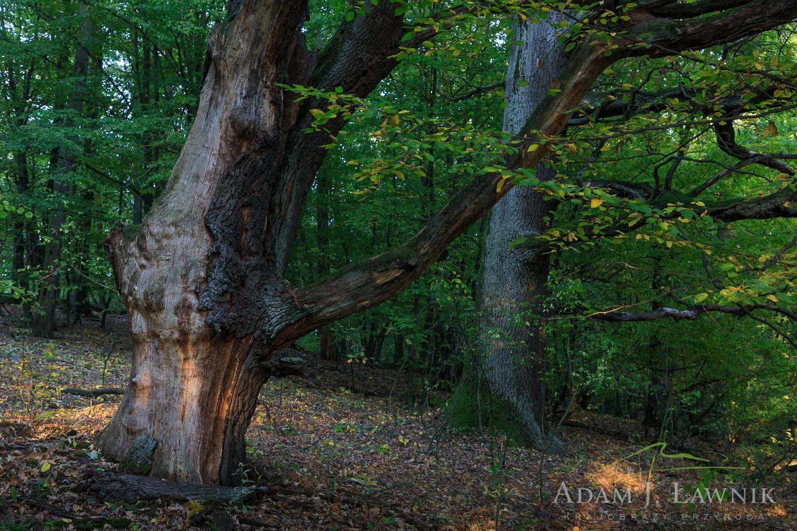 Kampinos National Park, Poland 1810-00463C