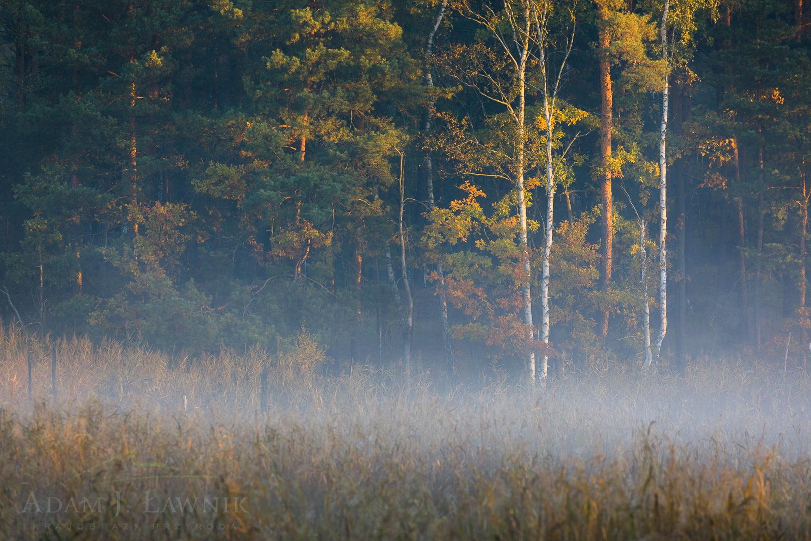 Kampinos National Park, Poland 1810-00468C