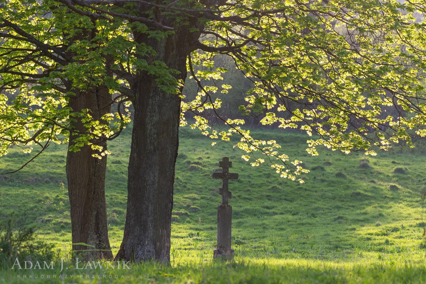 Magura National Park, Poland 1505-00561C