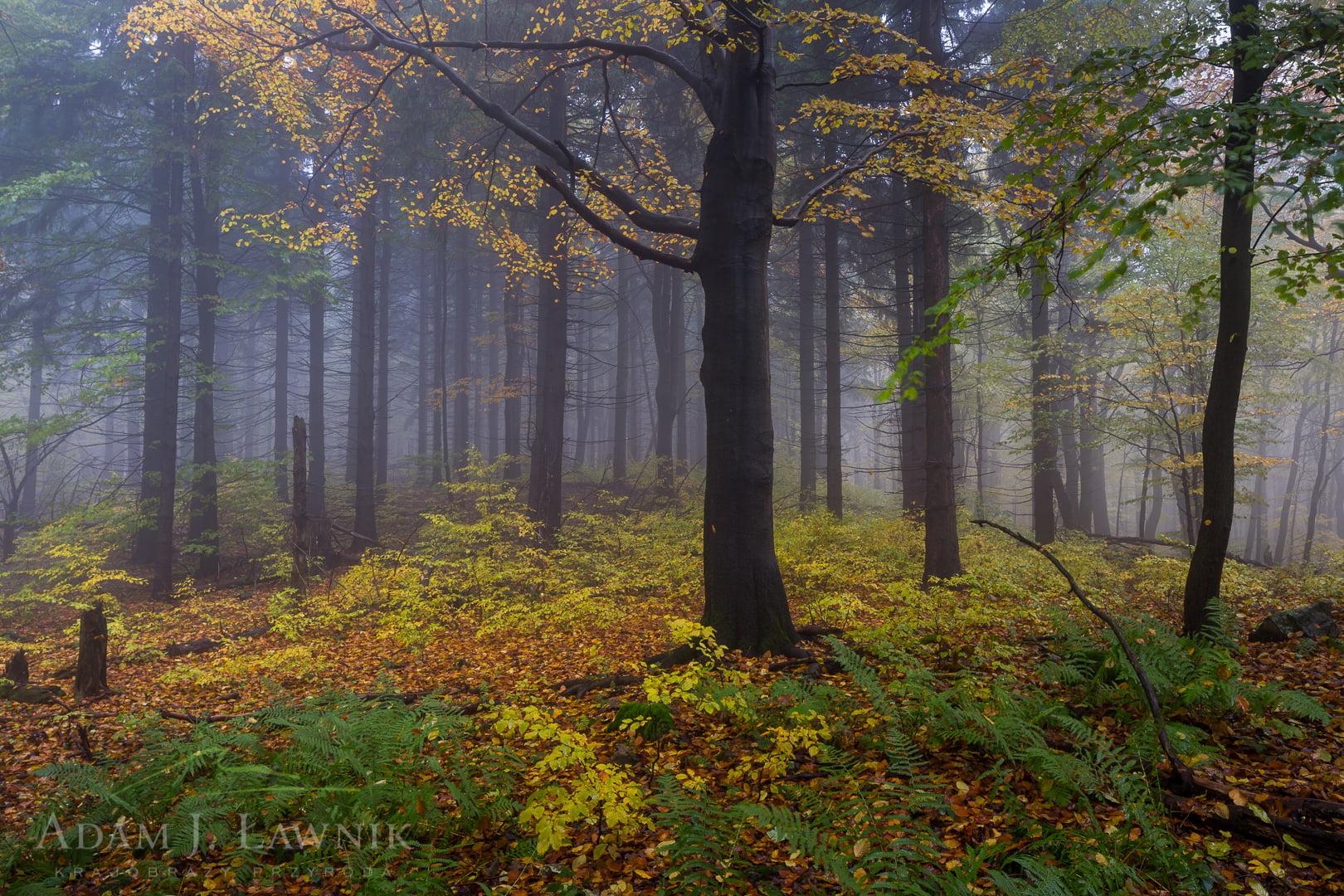 Magura National Park, Poland 1510-00913C