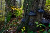 Las o charakterze naturalnym w Magurskim Parku Narodowym