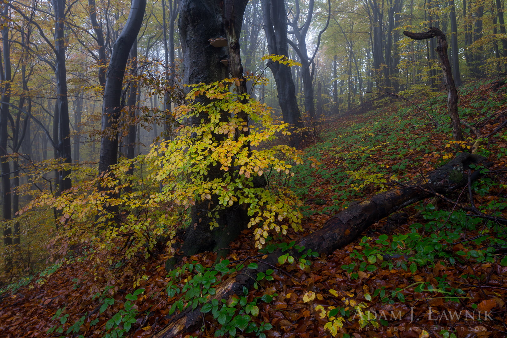 Magura National Park, Poland 1510-00937C