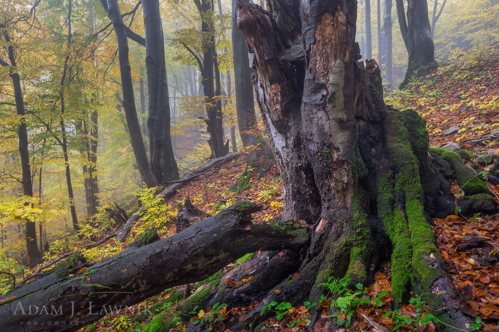 Magura National Park, Poland 1510-00940C