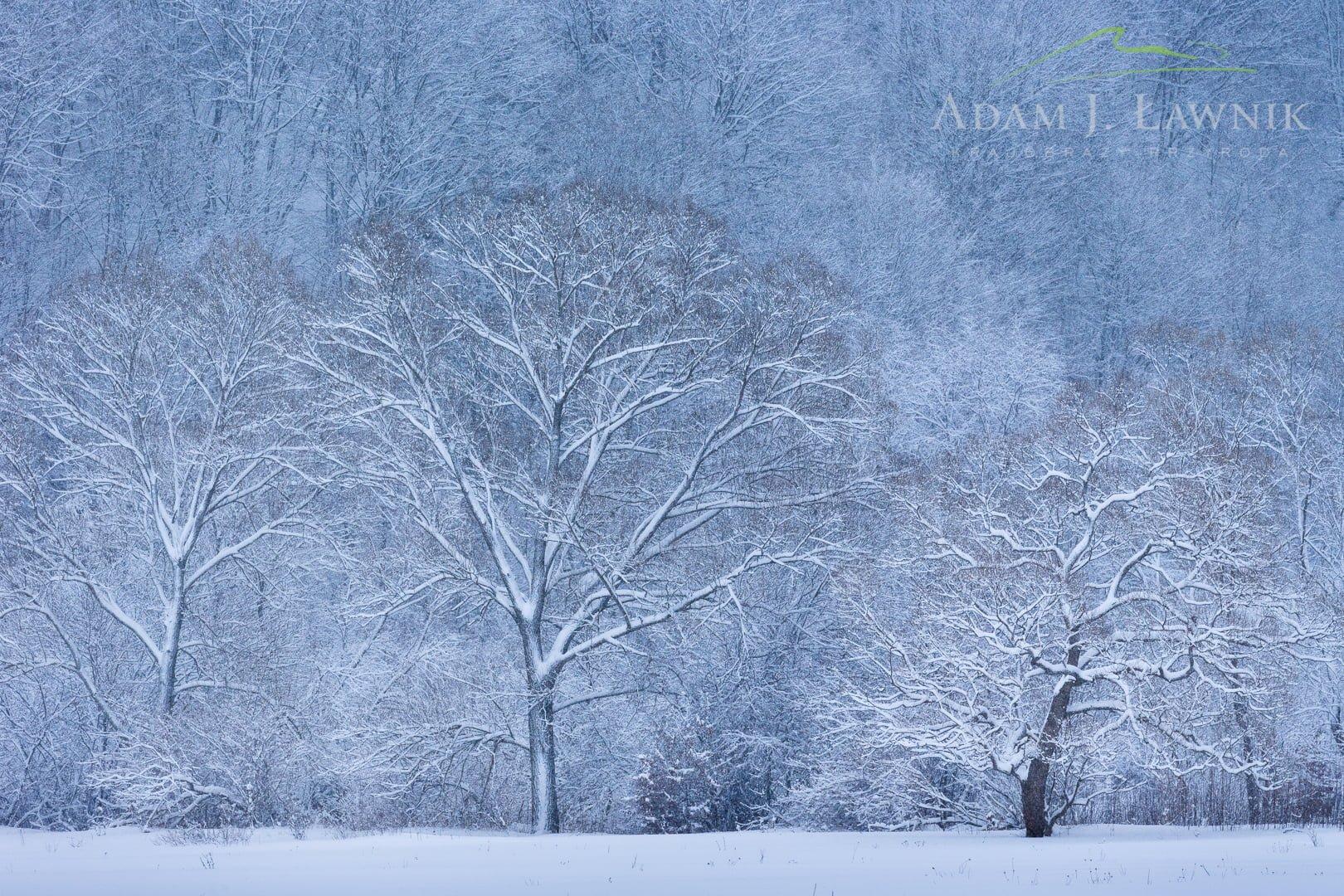 Magura National Park, Poland 1701-00076C