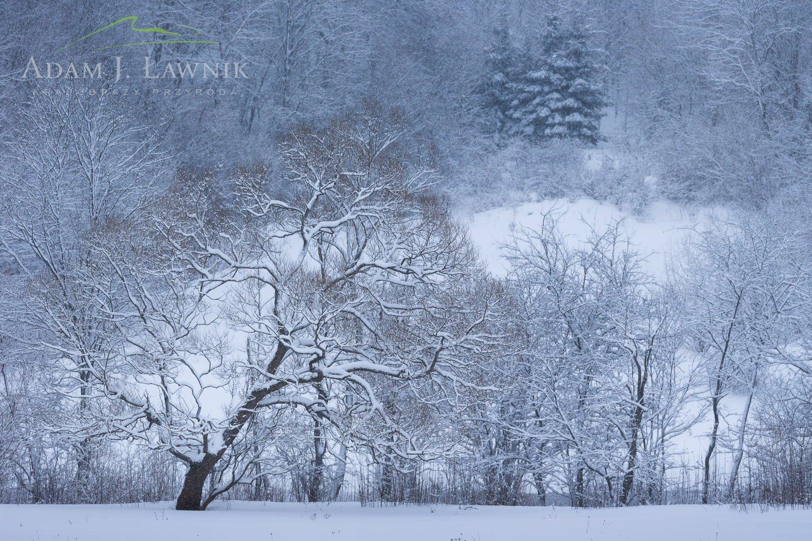 Zima w Magurskim Parku Narodowym